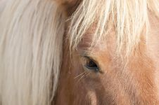 Free Horse Eye Stock Photos - 27126723