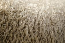 Free Wool Texture Royalty Free Stock Photo - 27126735