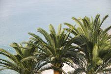 Three Palm Trees On Beach Stock Photo