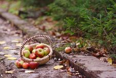 Apples In The Forest Royalty Free Stock Images