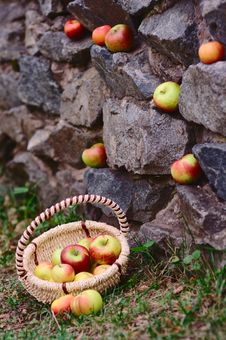 Free Apples In The Autumn Park Stock Photography - 27128592