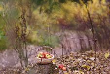 Free Apples In The Park Royalty Free Stock Image - 27128596