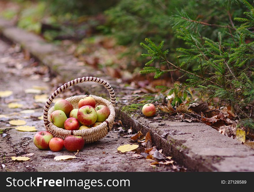 Apples in the forest