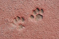 Free Cat Paw Prints In Concrete Royalty Free Stock Images - 27137339