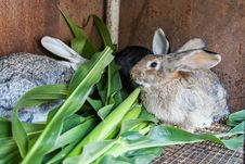 Free Some Rabbits In Cage Royalty Free Stock Photography - 27131127