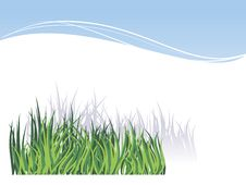 Grass, Isolated On White Background Stock Photography