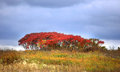 Free Red Autumn Bush Stock Images - 27141304