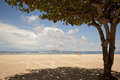 Free Shadow Of A Big Tree At A Beach Stock Photo - 27147700