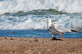 Free Seagull On The Beach Royalty Free Stock Images - 27147939