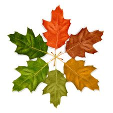 Free Autumn Leaves Royalty Free Stock Images - 27141959