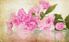Free Pink Roses On Grunge Background Royalty Free Stock Images - 27143649