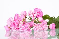 Free Pink Roses Royalty Free Stock Photography - 27143727