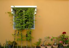 Free Windows On A Wall Covered Stock Photos - 27143823