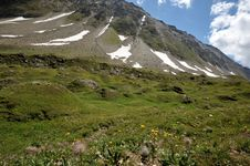 Free Flowers On Trail, Nufenenpass, Switzerland Royalty Free Stock Photography - 27148087