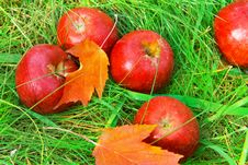 Free Fallen Red Apples In Green Grass. Royalty Free Stock Images - 27150449