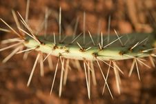 Free Cactus Spines Stock Photos - 27155173