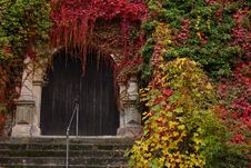 Old Wooden Door Surrounded By Colorful Fall Leaves Royalty Free Stock Photo