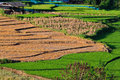Free Terraced Rice Fields In Northern Thailand Stock Images - 27176244