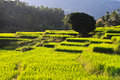 Free Terraced Rice Fields In Northern Thailand Royalty Free Stock Photo - 27176295