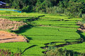 Free Terraced Rice Fields In Northern Thailand Royalty Free Stock Photography - 27176337