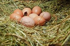 Free Hens  Eggs Royalty Free Stock Photos - 27170538