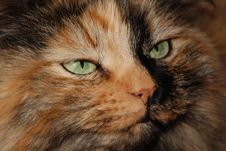 Green Cat Eyes Royalty Free Stock Photography