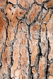 Free Pine Tree Bark Background Stock Image - 27172741