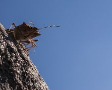 Free Stink Bug Stock Images - 27175174