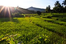 Free Terraced Rice Fields In Northern Thailand Stock Image - 27176311