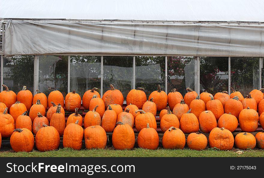 Picking pumpkins at the nursery