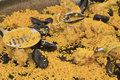 Free Seafood Paella In Large Frying Pan. Royalty Free Stock Photos - 27185398