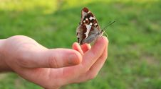 Free Butterfly On Finger Royalty Free Stock Image - 27186716