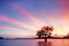 Free Mangrove Tree Sunset Royalty Free Stock Photo - 27187225