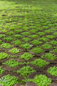 Free Grass Floor Block Stock Images - 27187914