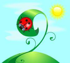 Free Funny Ladybug Stock Photos - 27188993