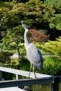 Free Curious Crane Royalty Free Stock Photos - 27194908