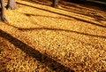 Free Autumn Leaves Stock Image - 27197971