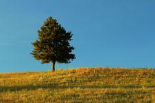 Free Lone Tree Royalty Free Stock Photo - 27192735