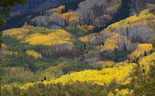 Free Colorado Fall-12 3751 Royalty Free Stock Photos - 27194608