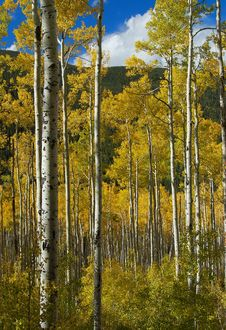 Free Colorado Fall-12 4063 Stock Images - 27194654