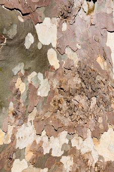 Free Sycamore Tree Bark Background Royalty Free Stock Photo - 27196485