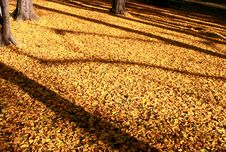 Free Autumn Leaves Stock Image - 27197971