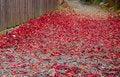 Free Autumn Path Royalty Free Stock Image - 2722496