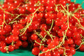 Free Berries Of A Red Currant. Royalty Free Stock Photos - 2723548