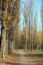 Free Autumn Park Royalty Free Stock Photography - 2725057