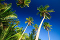 Free Tropical Palm Tree Paradise Royalty Free Stock Images - 2727209