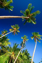 Free Tropical Palm Tree Paradise Stock Images - 2727214