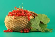 Free Berries Of A Red Currant. Royalty Free Stock Photos - 2723538