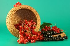 Free Red And Black Currant. Stock Image - 2723551