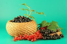 Free Red And Black Currant. Stock Photos - 2723553